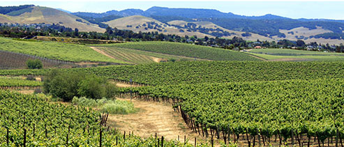 Central Coast Vineyards