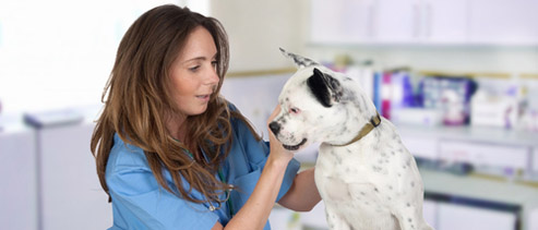 Allan Hancock College - Registered Veterinary Technician
